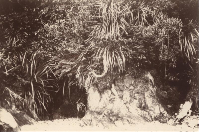 Nathaniel Lord Britton Photograh Records, Cockayne
