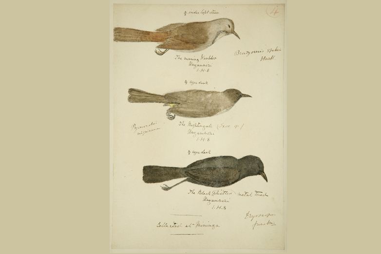 The morning warbler, the nightingale and the black whistler; Expedition of Speke and Grant to the source of the Nile, 1860